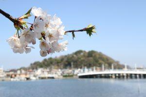 野島と桜の風景