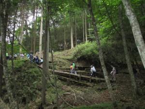 源流の森①