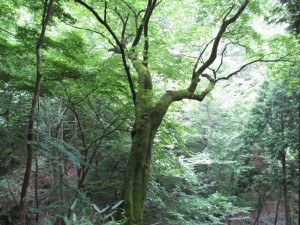 源流の森③